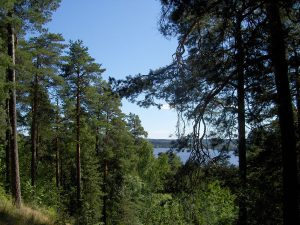 1200px-Pyynikki_ridge4